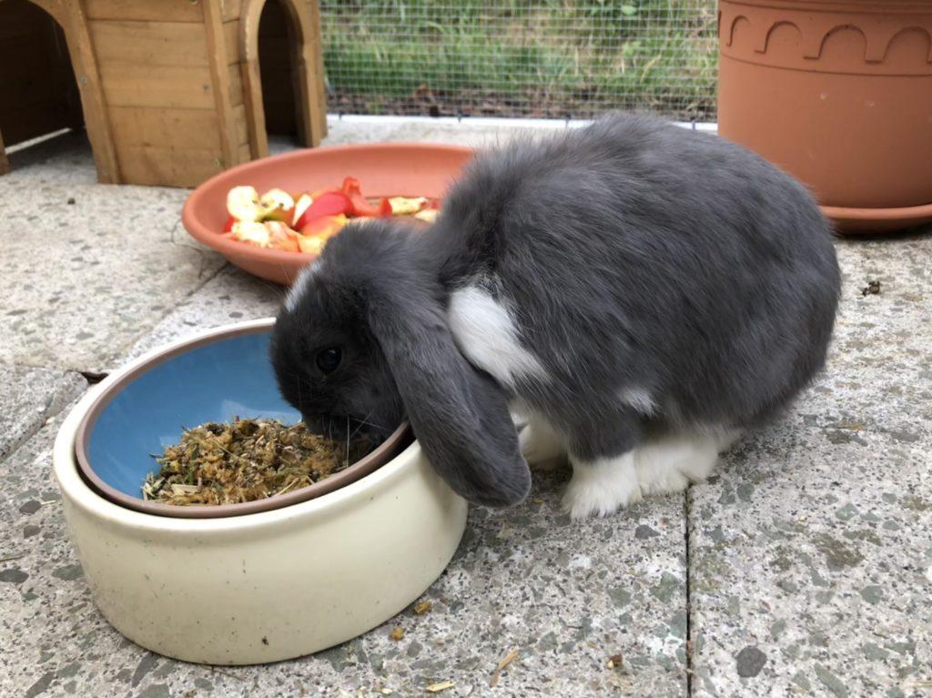 Immunbrei für Kaninchen