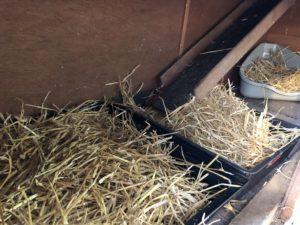 Toilette für Kaninchen
