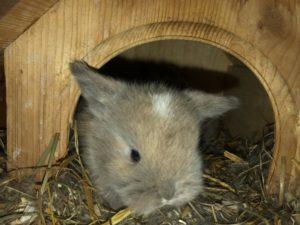 Kaninchen Babys 20 Tage
