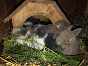 Kaninchen Babys Futter