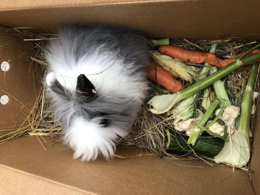 Tierversand Kaninchen
