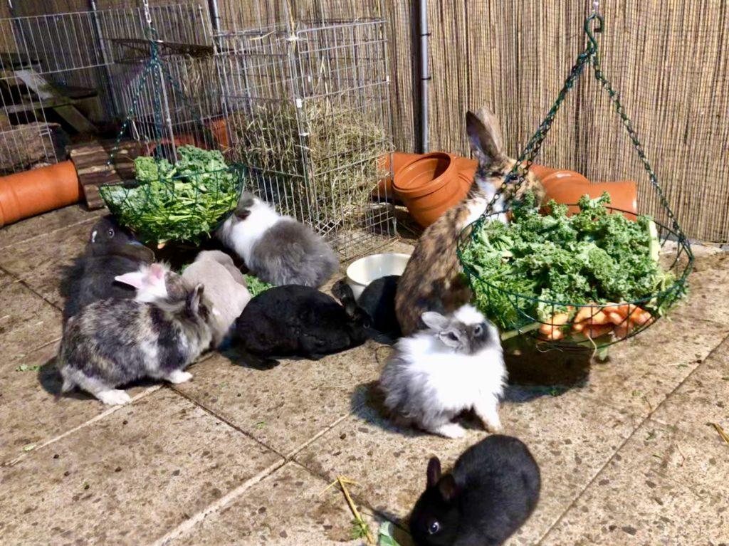 Futter für Kaninchen