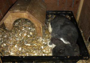 Kaninchen Nest