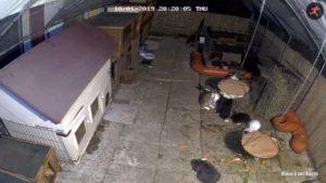 Überwachungskamera Kaninchen Haustiere