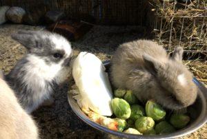 Kaninchen Babys 27 Tage
