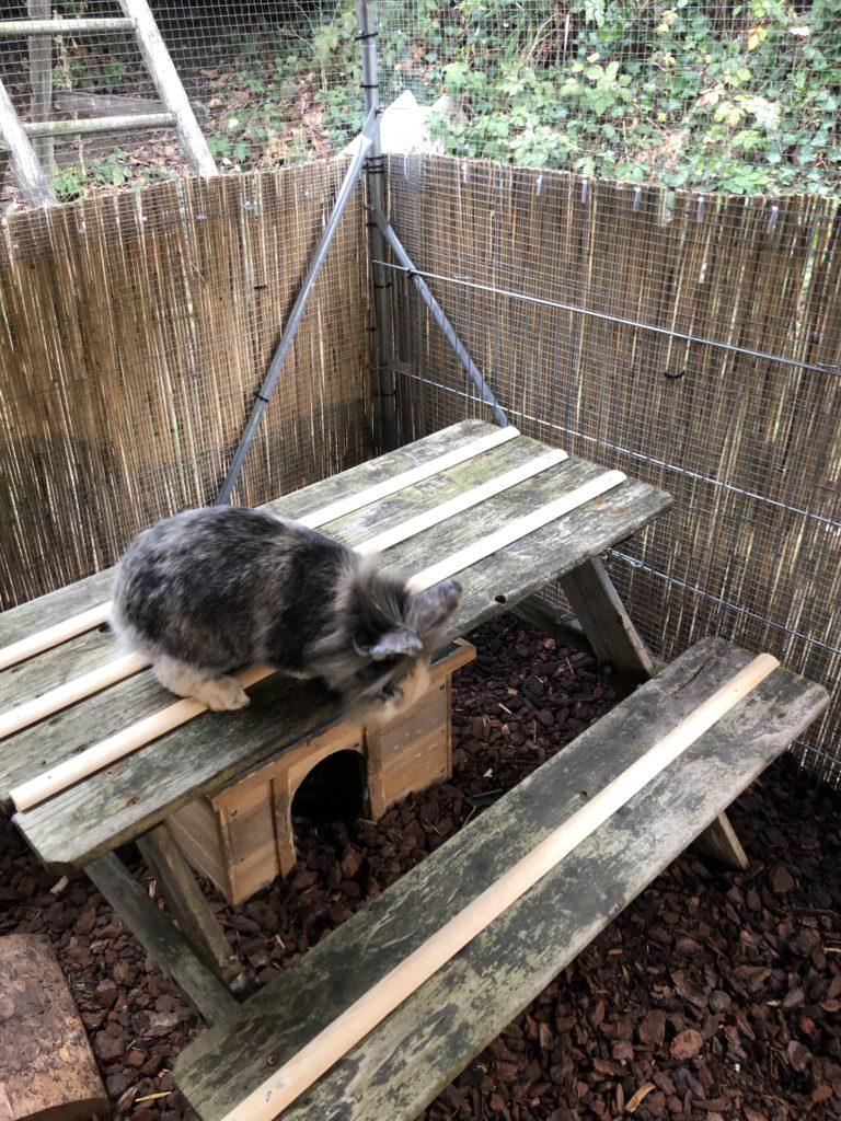 Picknicktisch für Kaninchen