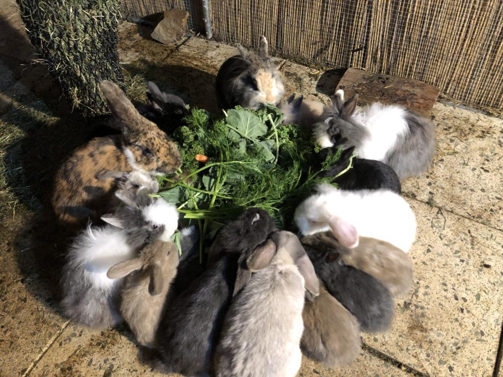 Fütterung Kaninchen