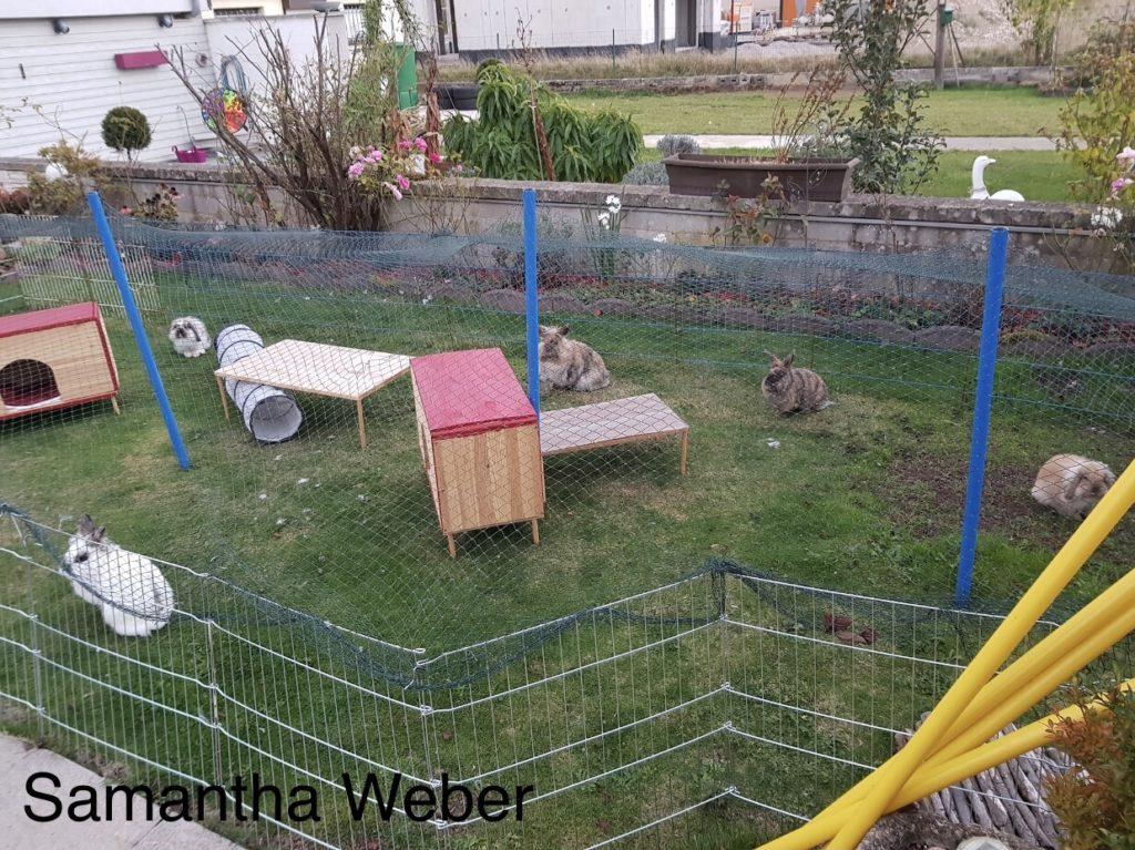 Freigehege für Kaninchen