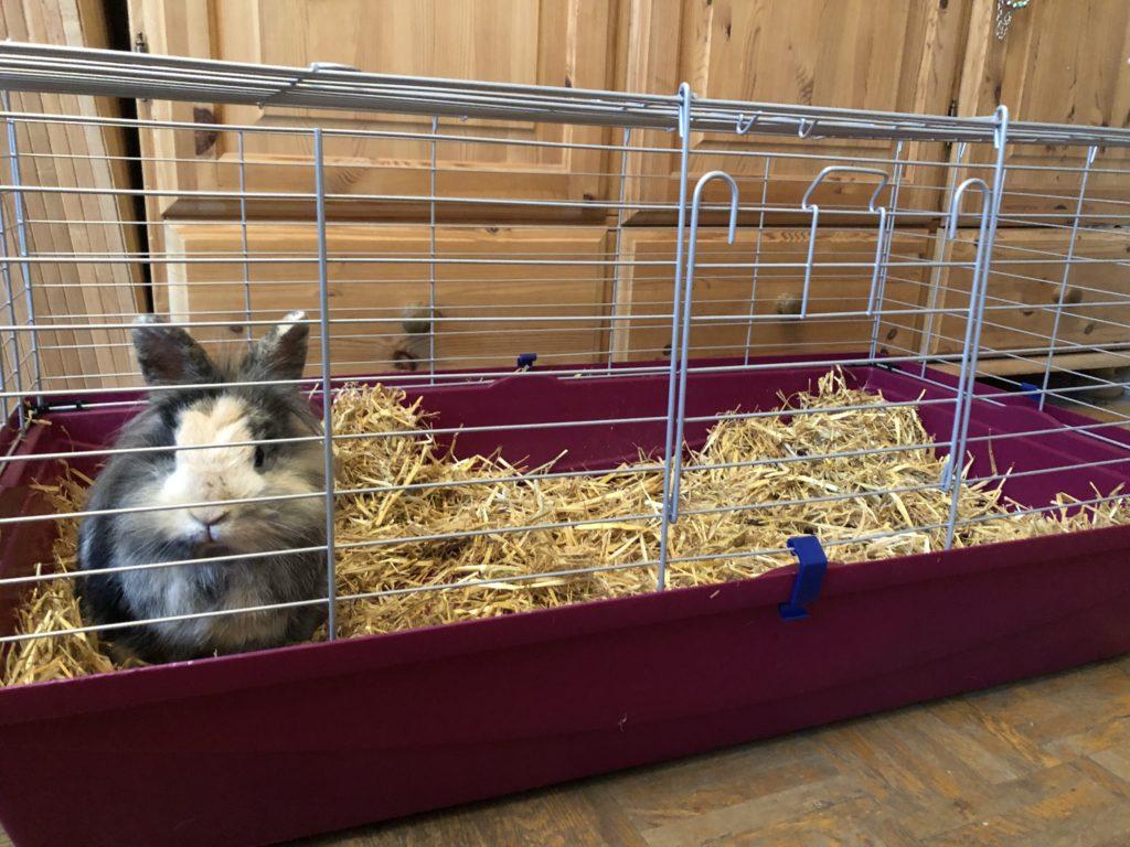 Käfig für Kaninchen