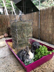 große Heuraufe für Kaninchen