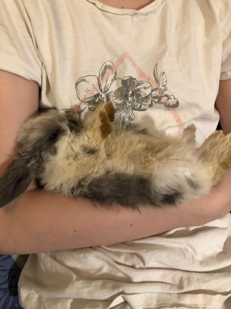 Kaninchen auf dem Arm