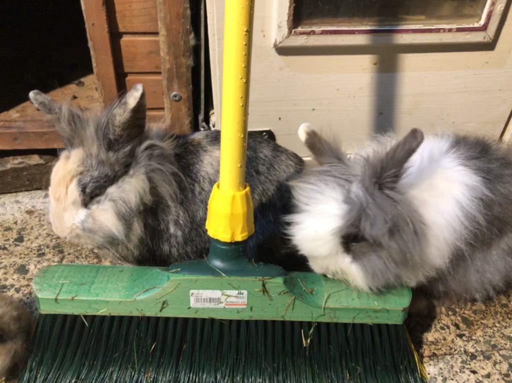 Krallenbesen Besen für Kaninchen