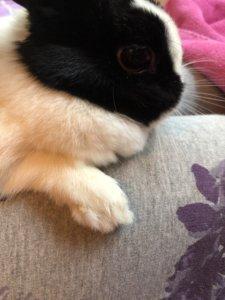 Kaninchen mit geschnittenen Krallen