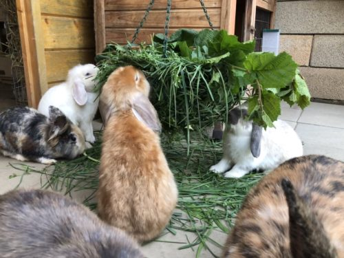 Wiese für Kaninchen