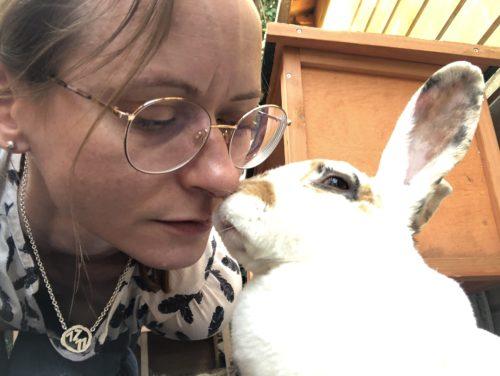 Kaninchen Kuss Kuss von einem Kaninchen
