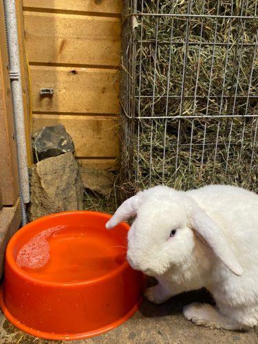 beheizbarer Napf für Kaninchen