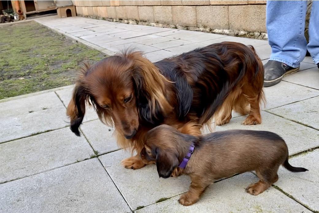 Fremden hund kennenlernen