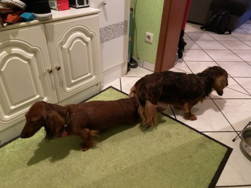 Hängen bei Hunden