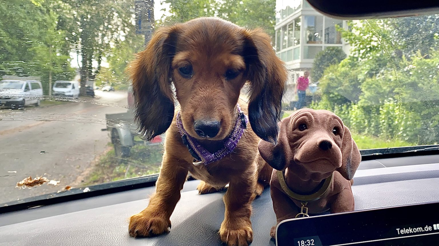 Auto fahren mit Hund * Dackel & Kaninchen-Clan