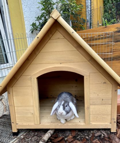Hundehütte Kaninchenhaus