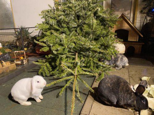 Tannenbaum Kaninchen