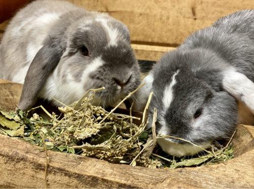 getrocknete Kräuter für Kaninchen
