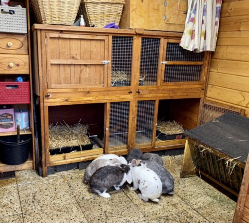 Kaninchen-Stall Hasenstall