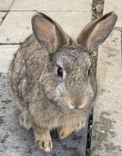 Wildmix Kaninchen