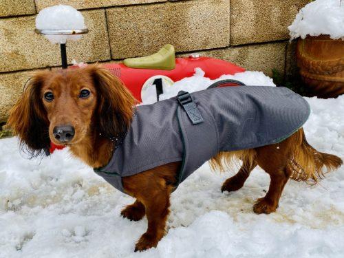 Mantel für Dackel Hundemantel