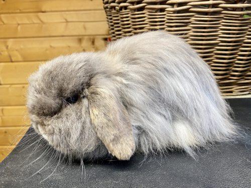Fellpflege Cashmere Kaninchen